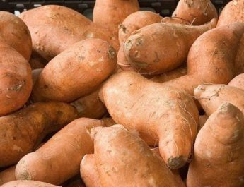 l_sweet-potatoes-1483344360