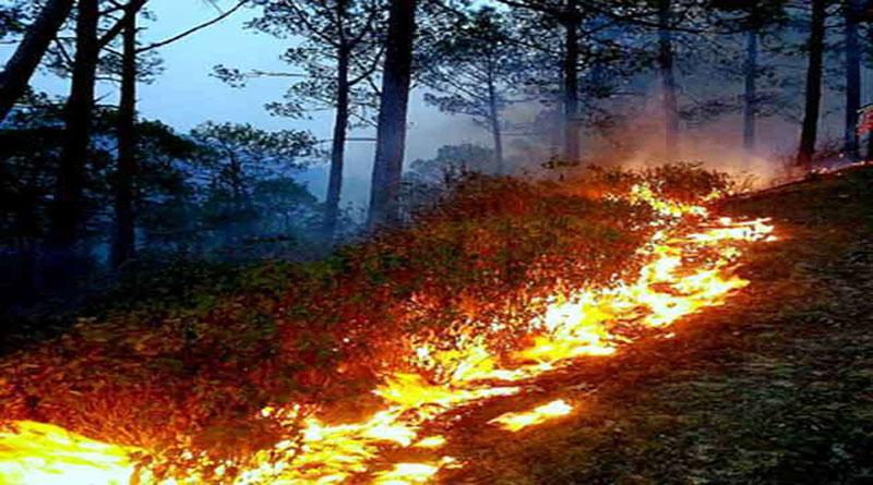 जंगलों की आग बुझाने में महिलाओं से संभाला मोर्चा, एक महिला घायल