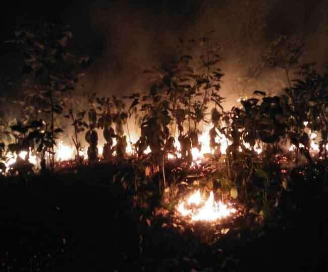 उत्तराखंड: जंगल में आग की सूचना से वन महकमे में मचा हड़कंप