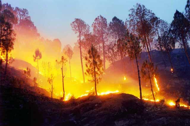 जानकर हैरान हो जाएंगे आप, ऐसी झाड़ू से जंगल में आग बुझाना सबसे कारगार
